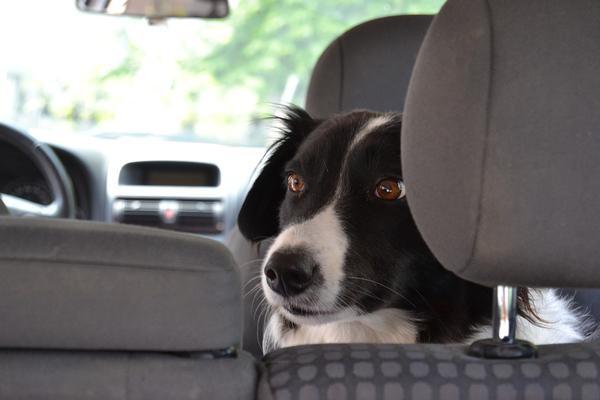 fotelik-samochodowy-dla-psa.jpg